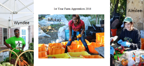 2016-apprentices